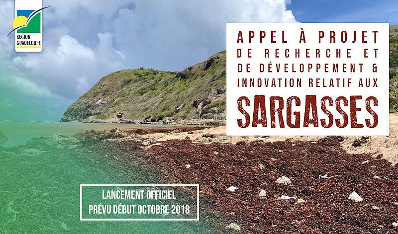 Futur appel à projets de recherche et de développement & innovation relatif aux sargasses